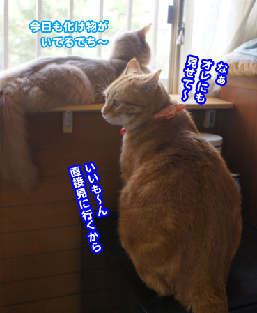 yunbo8707.jpg