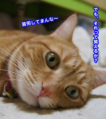 syuyaku0646.jpg