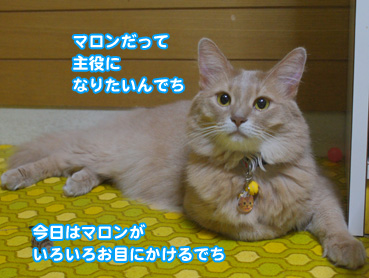 syuyaku01210.jpg