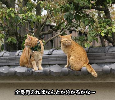 sokuri2592.jpg