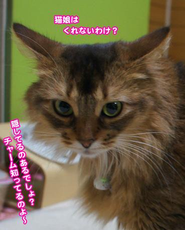 cyoko4387.jpg
