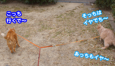 katou3629.jpg