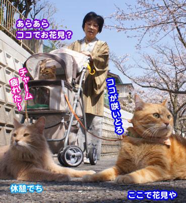 sakura2_8417.jpg