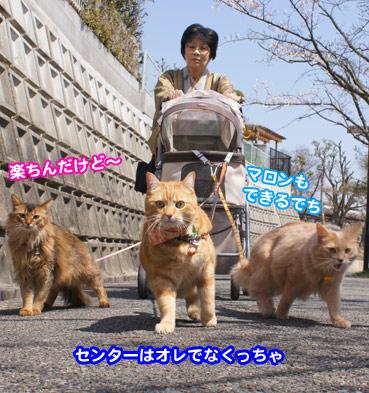 sakura2_8375.jpg