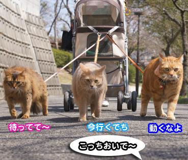 sakura2_8351.jpg