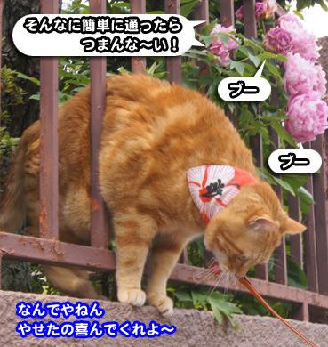 syaku8696.jpg