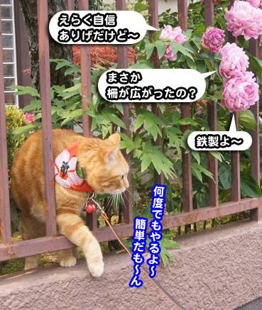 syaku8683.jpg