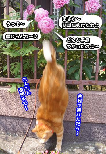 syaku8550.jpg