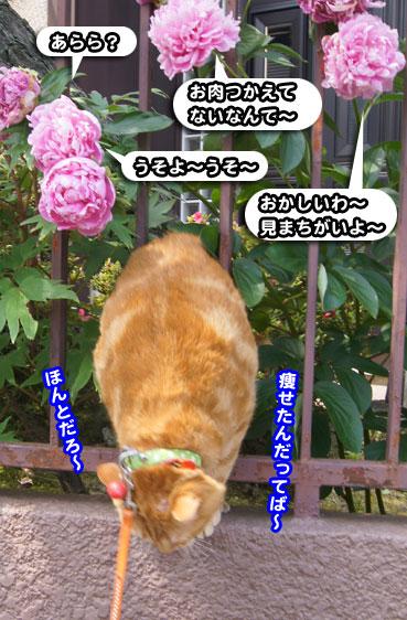 syaku8527.jpg