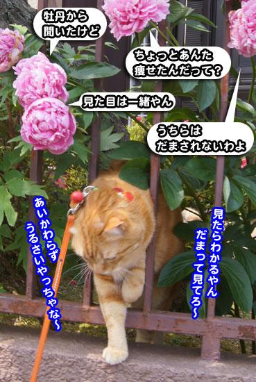 syaku8523.jpg