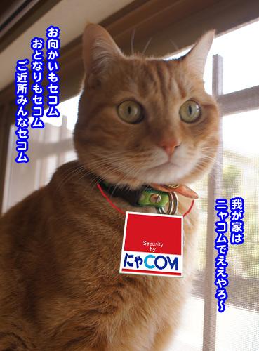 nyacom8077.jpg