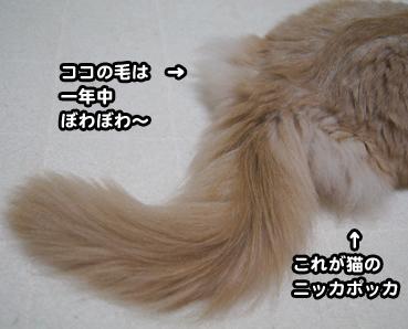 natufuku0285.jpg