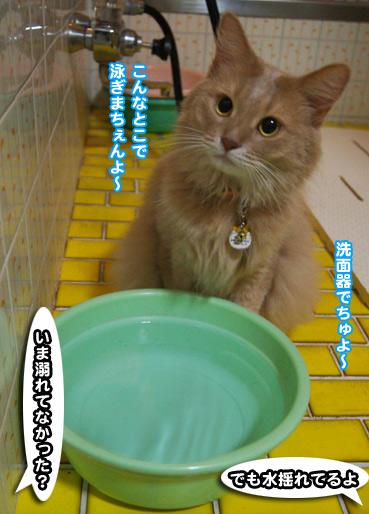 oyogu0092.jpg