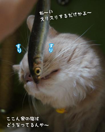 iwasi4695.jpg