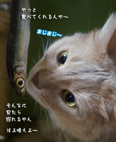 iwasi4691.jpg