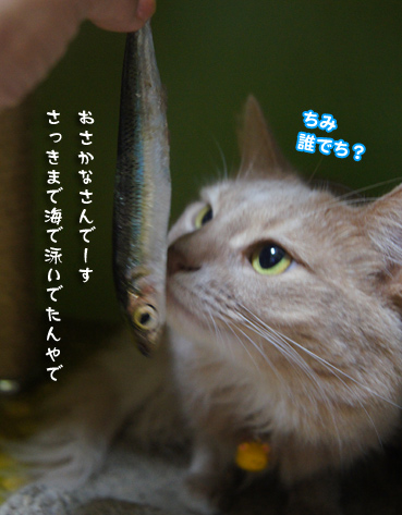 iwasi4685.jpg