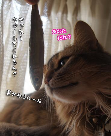 iwasi4680.jpg