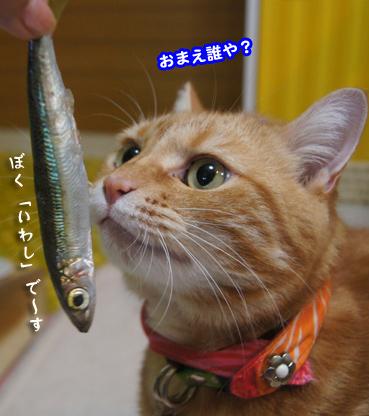 iwasi4675.jpg