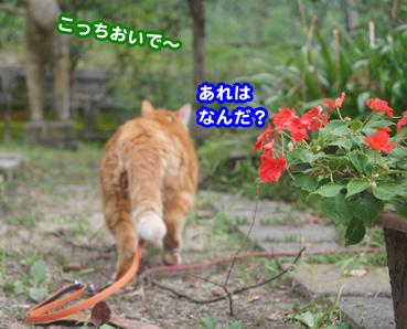 gakou4587.jpg