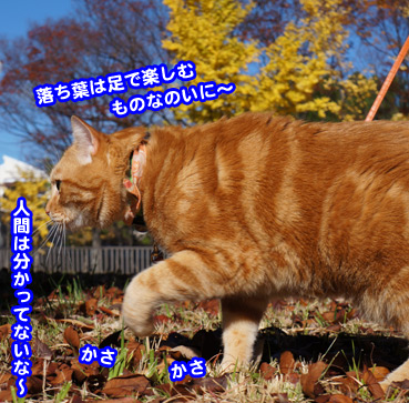 kouyo3582.jpg