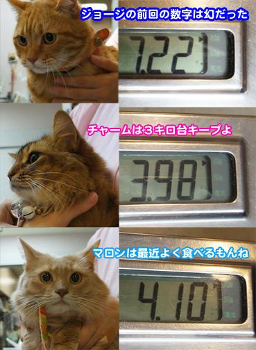 chiku3399.jpg