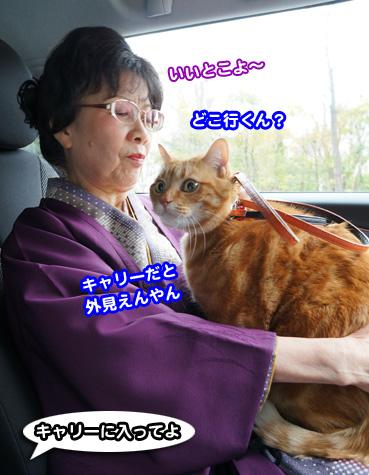 chiku3360.jpg