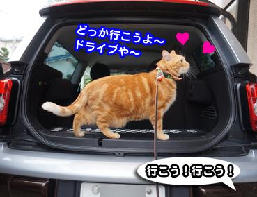 chiku3479.jpg