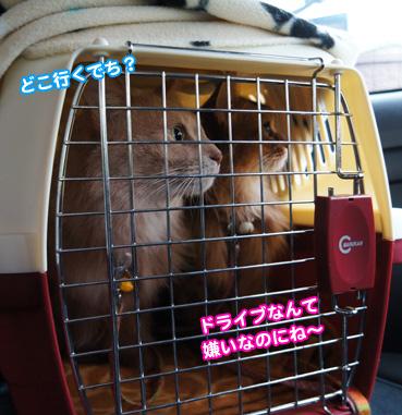 chiku3353.jpg