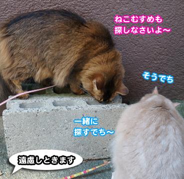 zubo0200.jpg