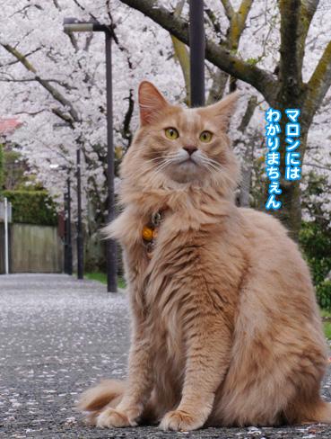 fubuki1421.jpg