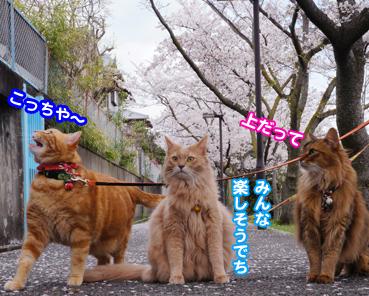 fubuki1470.jpg