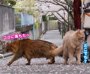 fubuki1590.jpg