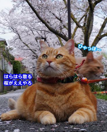 fubuki1381.jpg