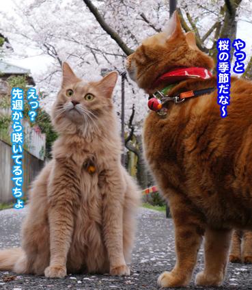 fubuki1462.jpg