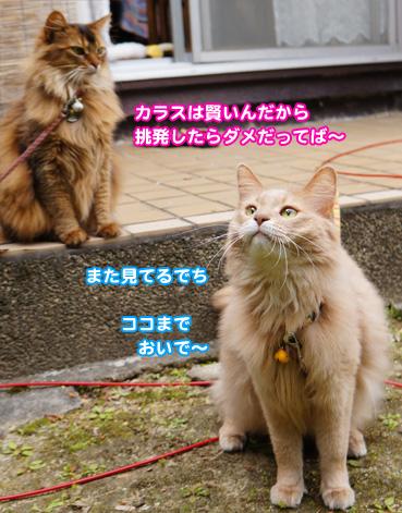 karasu3763.jpg