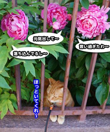syaku5744.jpg