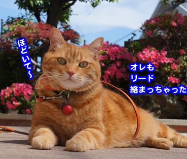 satuki6380.jpg