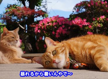 satuki6373.jpg