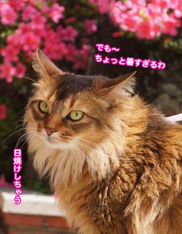 satuki6441.jpg