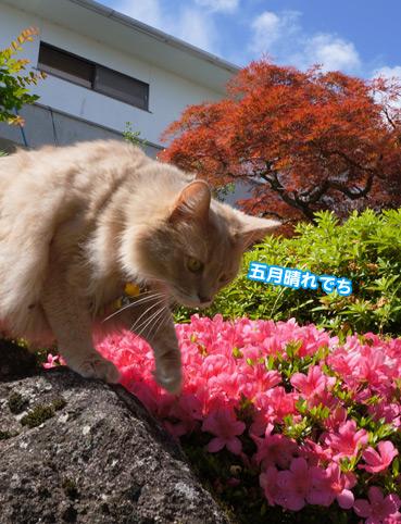 satuki6429.jpg