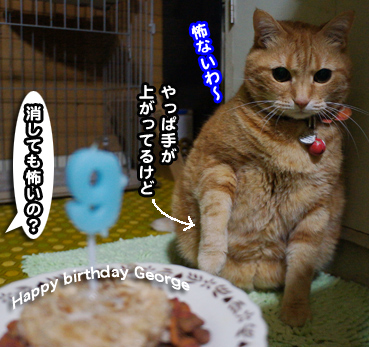 cake7361.jpg