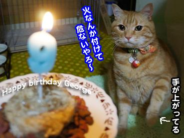 cake7358.jpg