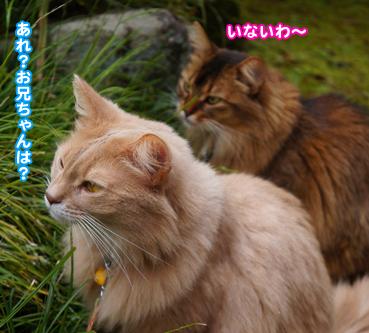 gaisyoku2377.jpg