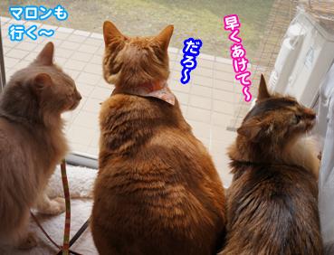 gaisyoku2300.jpg