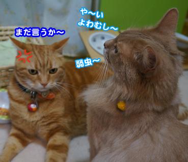 kaminari6593.jpg