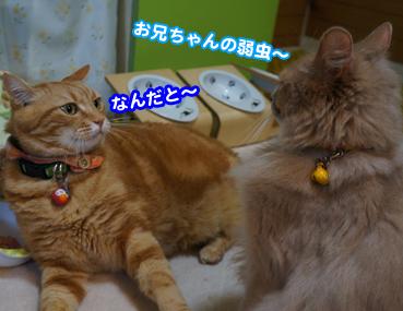 kaminari6592.jpg