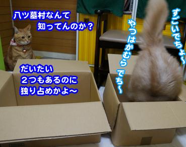 hako8933.jpg