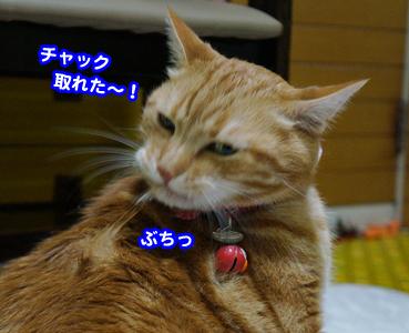 cyaku9538.jpg