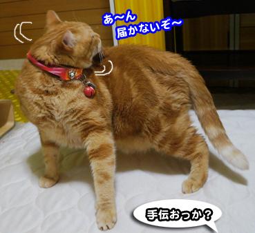 cyaku9517.jpg