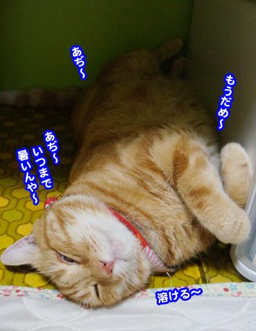 cyaku0737.jpg